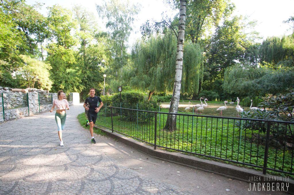 Wild Run Wroclaw bieg po zoo foto Jacek Urbanowicz JackBerry (10)